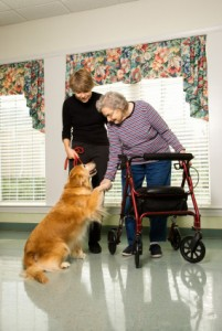 therapy-dog-training